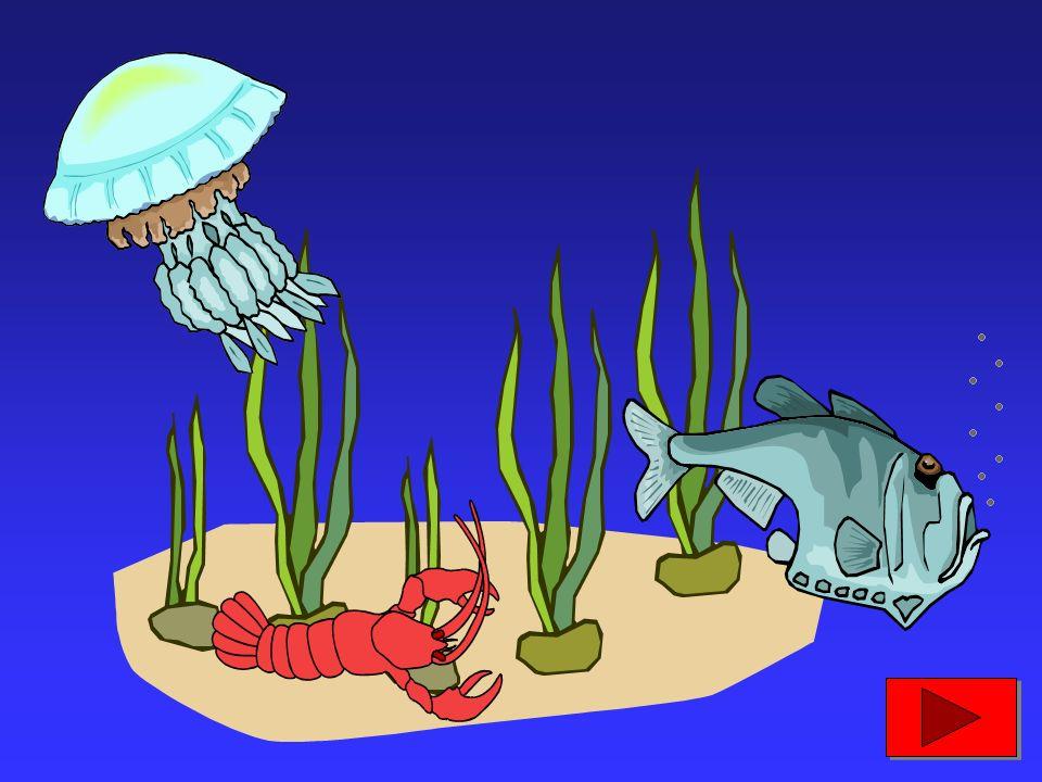 600 milioni di anni fa, comparvero prima le alghe, poi i molluschi e i crostacei e, infine, i primi pesci...