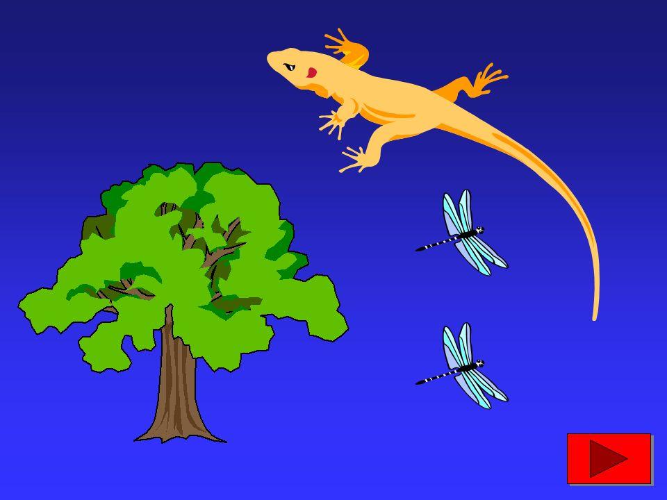 400 milioni di anni fa, alcuni animali, chiamati anfibi, iniziarono a vivere sulla terraferma; comparvero poi le piante e i primi insetti...