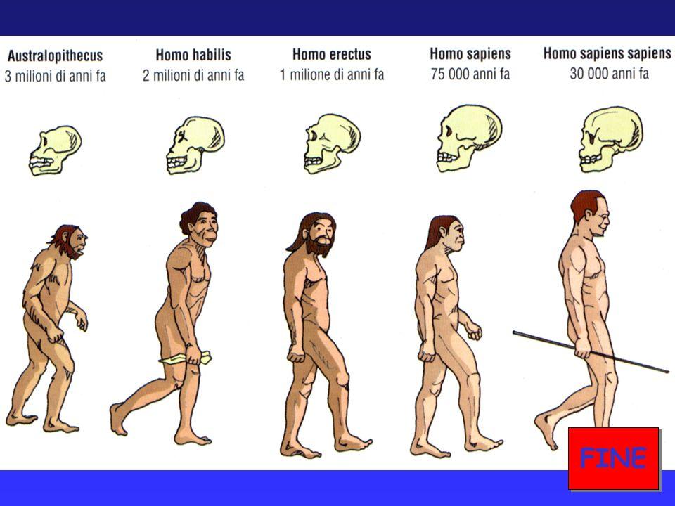 Circa 4 milioni di anni fa, comparvero i primi ominidi, cioè i primi antenati delluomo...