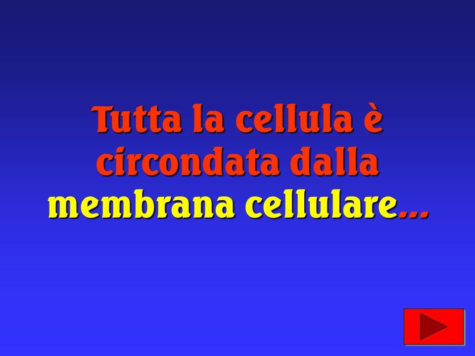Le cellule sono i mattoncini che formano gli esseri viventi; dai più semplici ai più complessi. Anche il nostro corpo, quindi, è formato da cellule.