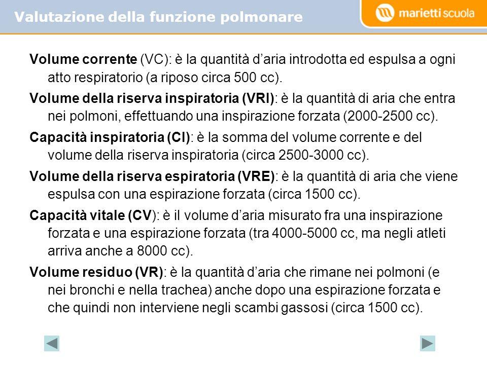 Volume corrente (VC): è la quantità daria introdotta ed espulsa a ogni atto respiratorio (a riposo circa 500 cc). Volume della riserva inspiratoria (V