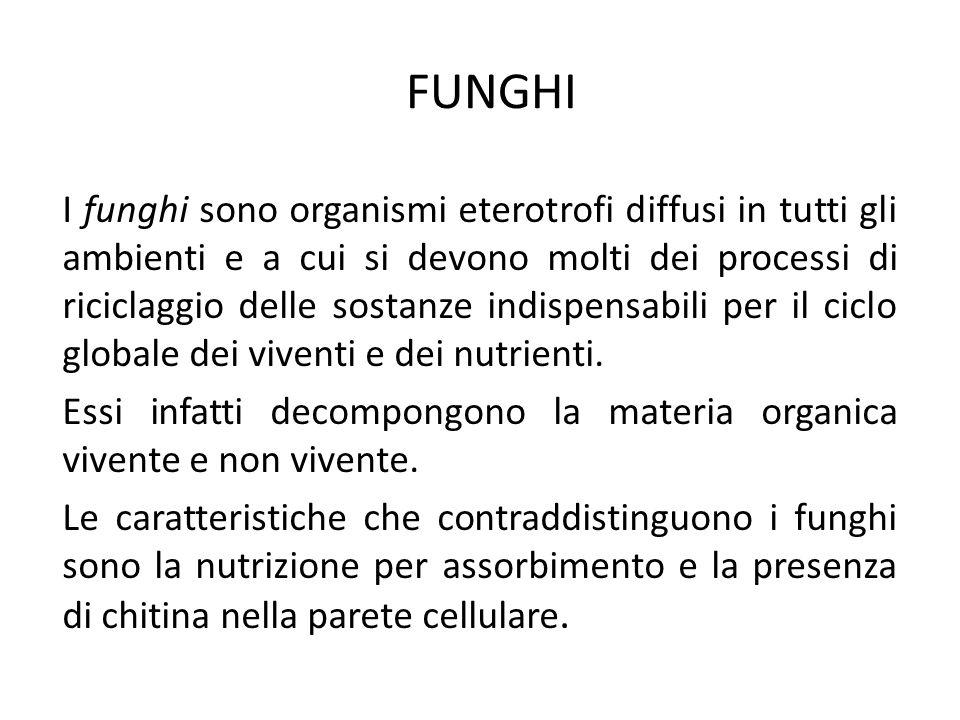 FUNGHI I funghi sono organismi eterotrofi diffusi in tutti gli ambienti e a cui si devono molti dei processi di riciclaggio delle sostanze indispensab