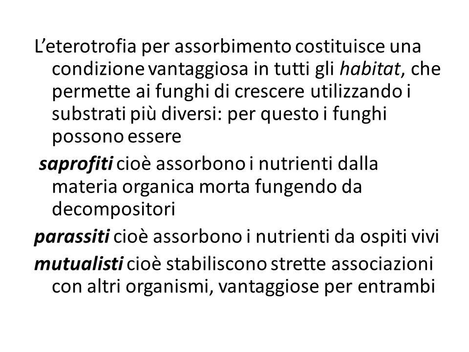 Leterotrofia per assorbimento costituisce una condizione vantaggiosa in tutti gli habitat, che permette ai funghi di crescere utilizzando i substrati