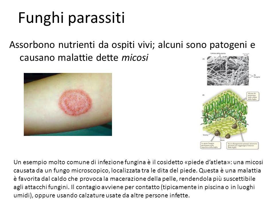 Funghi parassiti Assorbono nutrienti da ospiti vivi; alcuni sono patogeni e causano malattie dette micosi Un esempio molto comune di infezione fungina