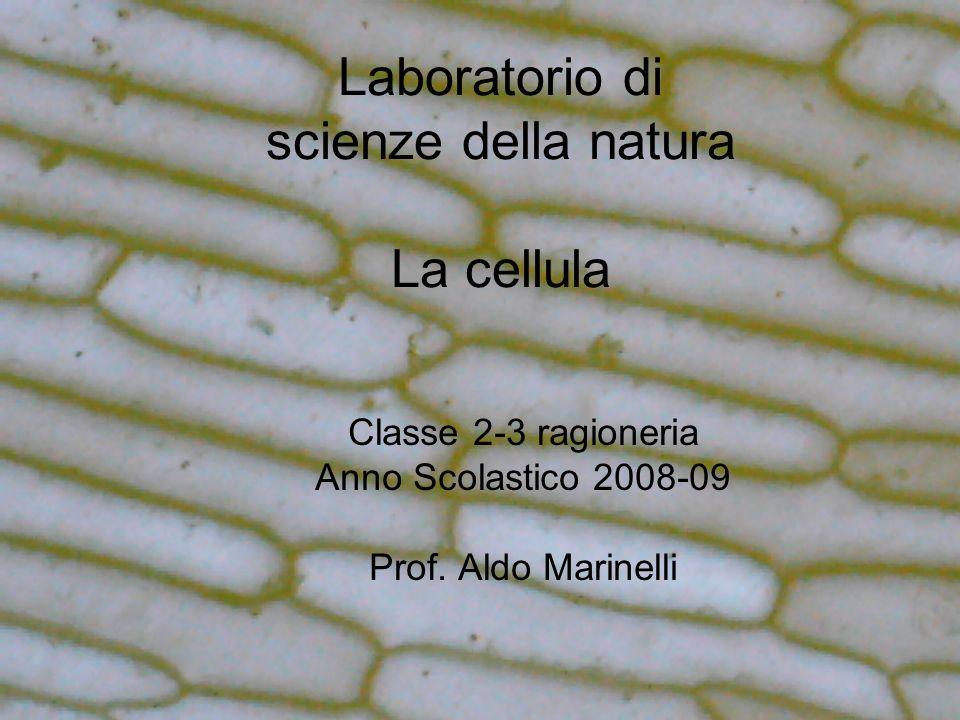 Laboratorio di scienze della natura La cellula Classe 2-3 ragioneria Anno Scolastico 2008-09 Prof. Aldo Marinelli