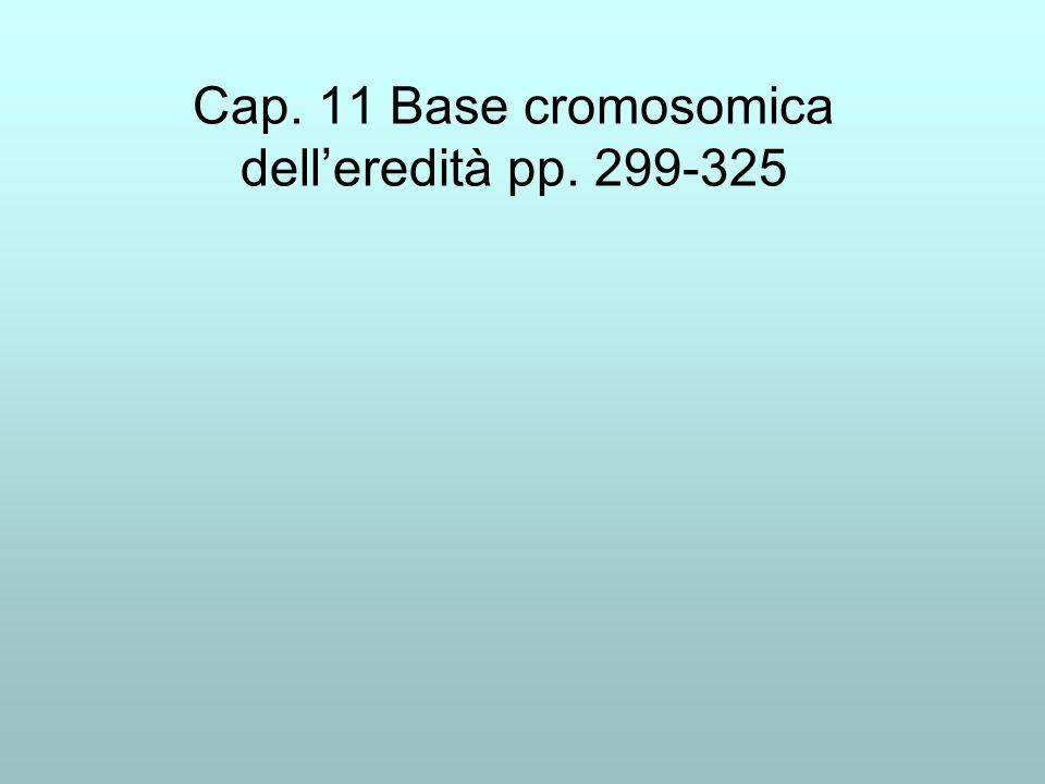 Cap. 11 Base cromosomica delleredità pp. 299-325