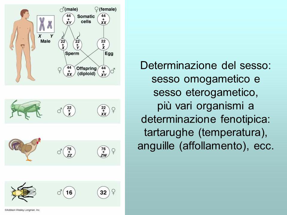 Determinazione del sesso: sesso omogametico e sesso eterogametico, più vari organismi a determinazione fenotipica: tartarughe (temperatura), anguille