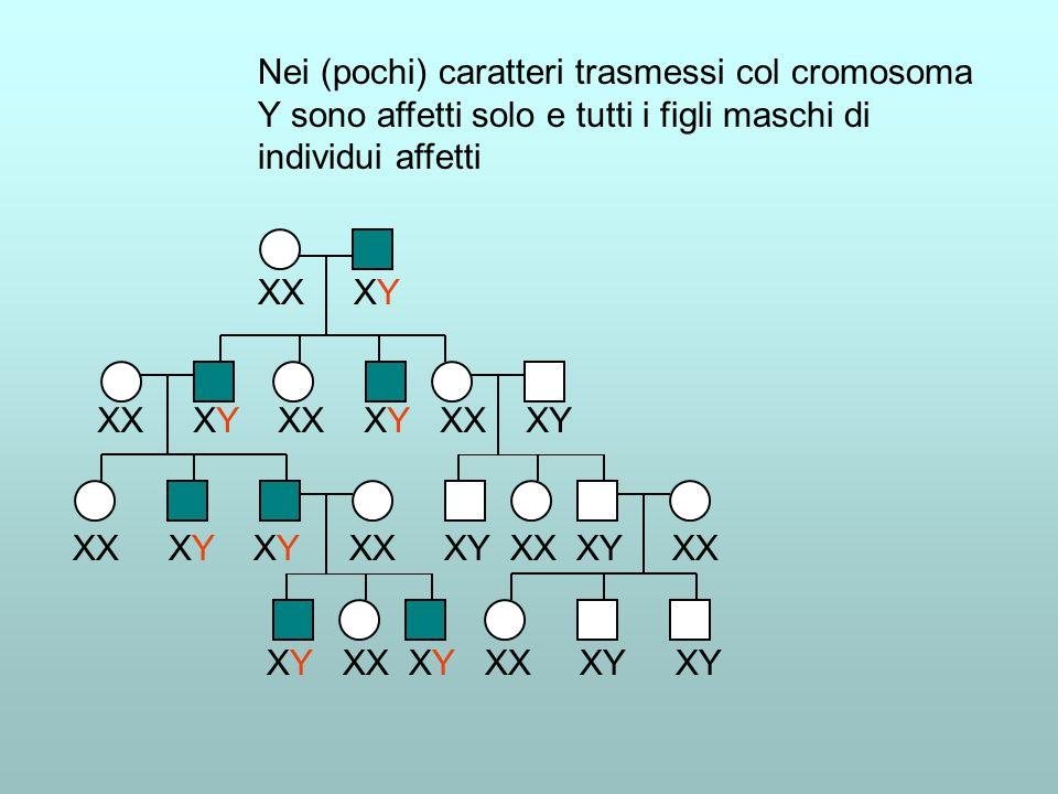 Nei (pochi) caratteri trasmessi col cromosoma Y sono affetti solo e tutti i figli maschi di individui affetti XX XY XX XY XX XY XX XY XX XY XY XX XY X