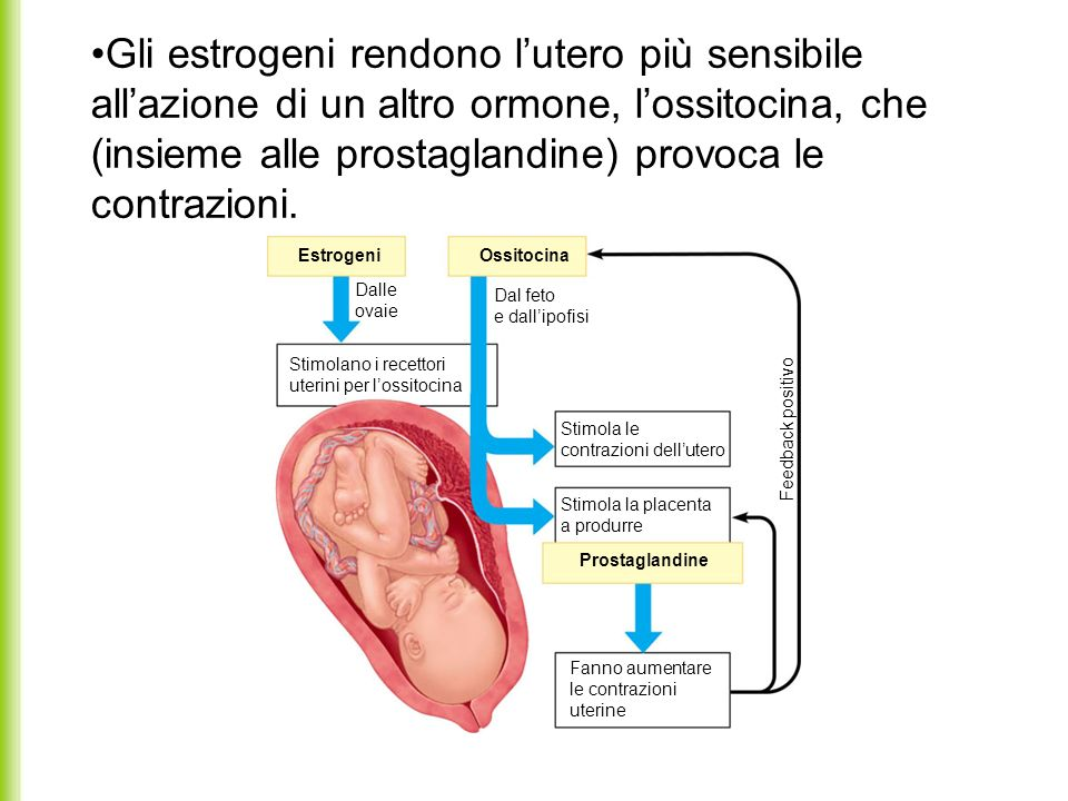 EstrogeniOssitocina Dalle ovaie Dal feto e dallipofisi Stimolano i recettori uterini per lossitocina Stimola le contrazioni dellutero Stimola la place