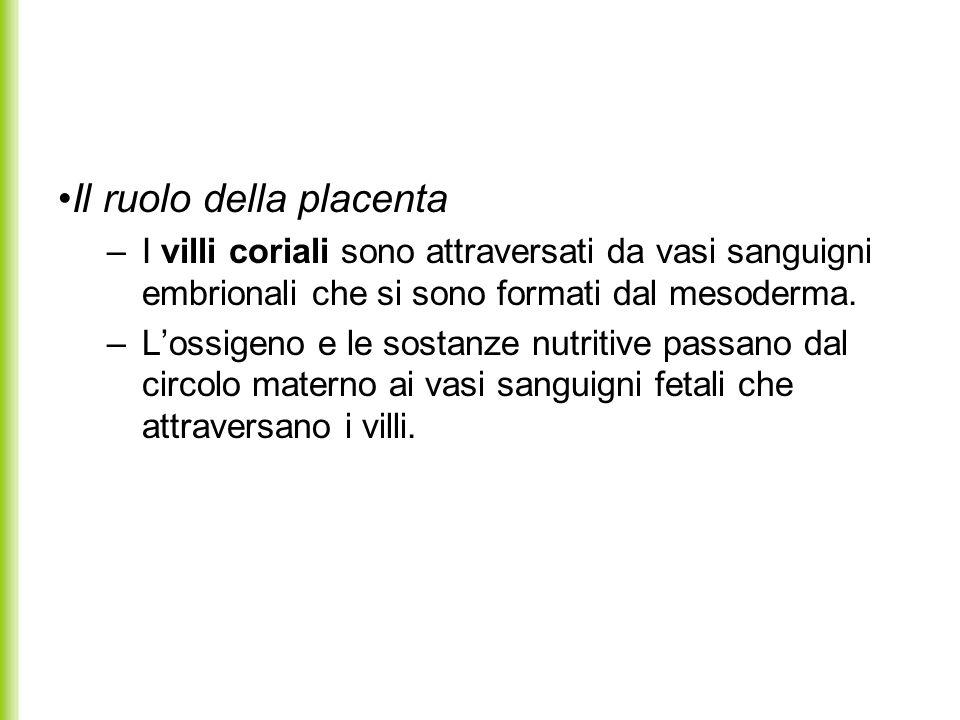 Il ruolo della placenta –I villi coriali sono attraversati da vasi sanguigni embrionali che si sono formati dal mesoderma. –Lossigeno e le sostanze nu