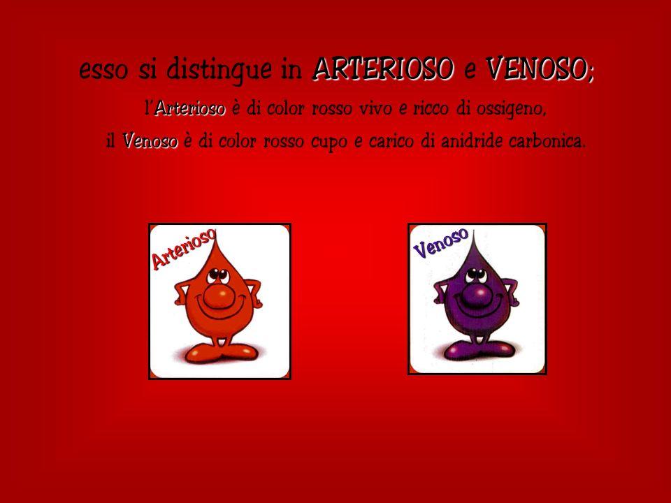 ARTERIOSOVENOSO; esso si distingue in ARTERIOSO e VENOSO; Arterioso lArterioso è di color rosso vivo e ricco di ossigeno, Venoso il Venoso è di color rosso cupo e carico di anidride carbonica.