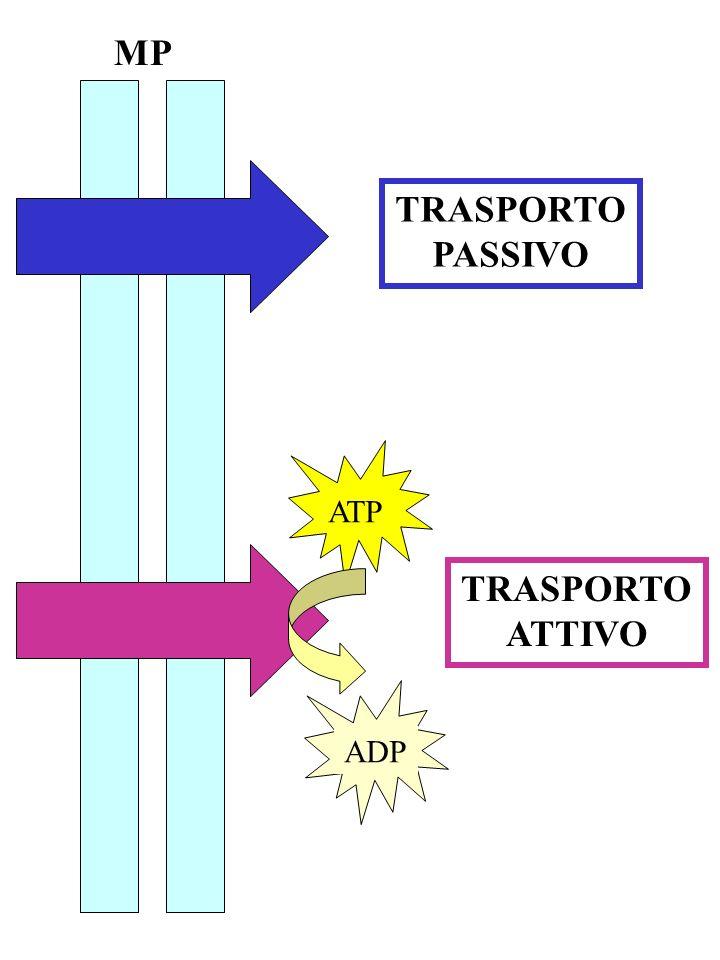 MP ATPADP TRASPORTO PASSIVO TRASPORTO ATTIVO
