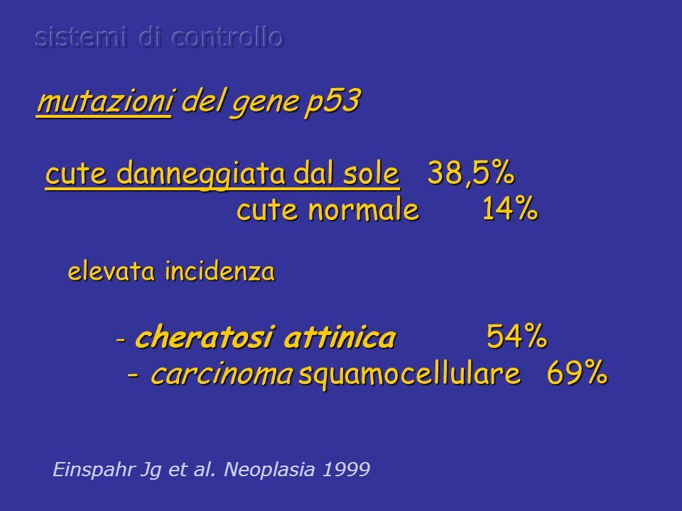 mutazioni del gene p53 cute danneggiata dal sole 38,5% cute danneggiata dal sole 38,5% cute normale 14% cute normale 14% elevata incidenza elevata inc