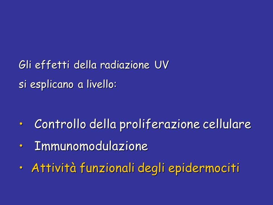 Gli effetti della radiazione UV si esplicano a livello: Controllo della proliferazione cellulare Controllo della proliferazione cellulare Immunomodula