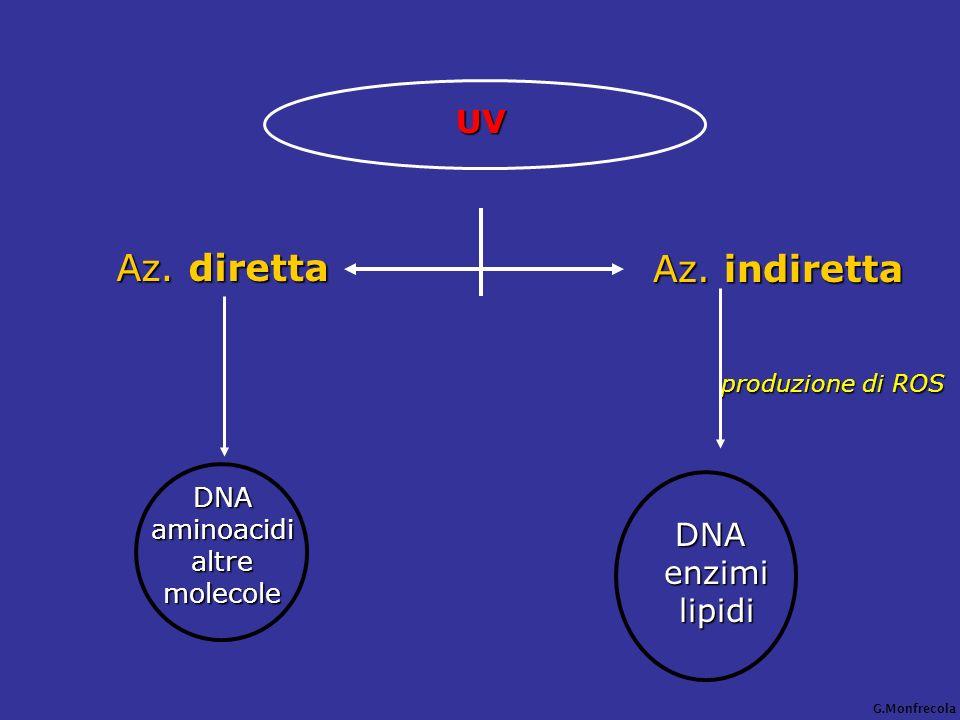 UV Az. diretta DNAaminoacidi altre altremolecole Az. indiretta produzione di ROS produzione di ROS DNA DNA enzimi enzimi lipidi lipidi G.Monfrecola