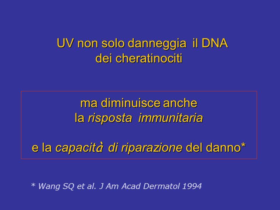 UV non solo danneggia il DNA dei cheratinociti ma diminuisce anche la risposta immunitaria e la capacit à di riparazione del danno* UV non solo danneg