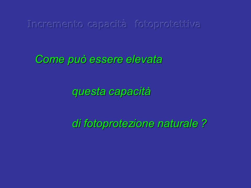 Come può essere elevata questa capacità questa capacità di fotoprotezione naturale ? di fotoprotezione naturale ?