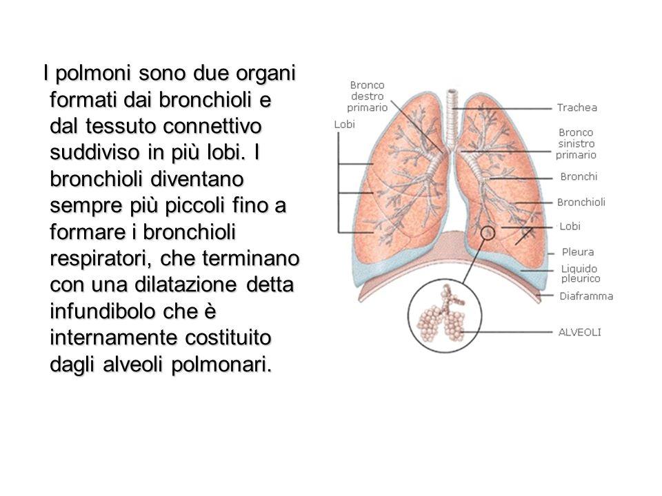 La respirazione L apparato respiratorio svolge due compiti di procurare lossigeno necessario alle cellule.