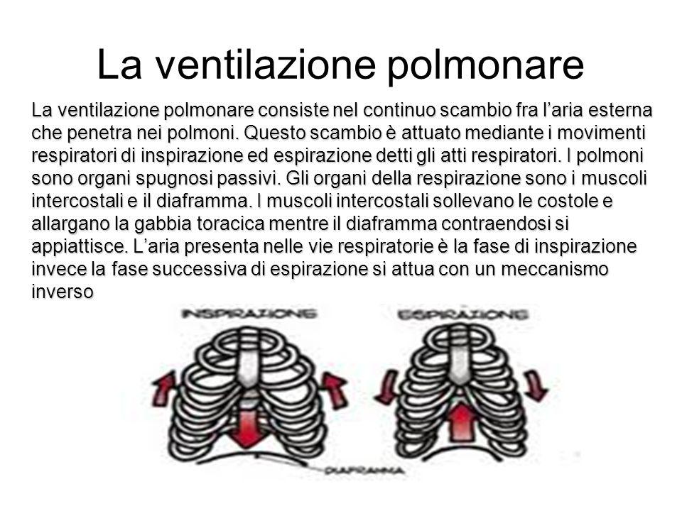 La ventilazione polmonare La ventilazione polmonare consiste nel continuo scambio fra laria esterna che penetra nei polmoni.
