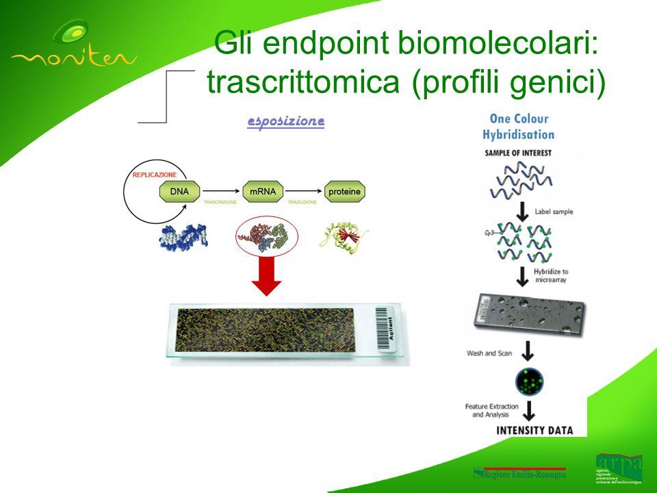 Gli endpoint biomolecolari: trascrittomica (profili genici) esposizione