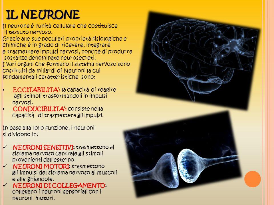IL NEURONE Il neurone è l'unità cellulare che costituisce il tessuto nervoso. Grazie alle sue peculiari proprietà fisiologiche e chimiche è in grado d