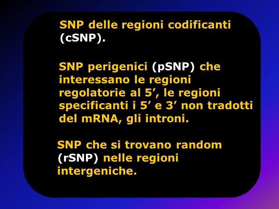 SNP delle regioni codificanti (cSNP). SNP perigenici (pSNP) che interessano le regioni regolatorie al 5, le regioni specificanti i 5 e 3 non tradotti