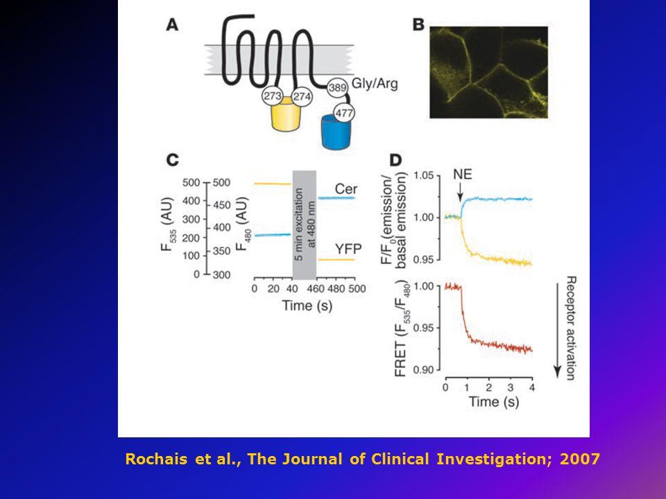 Rochais et al., The Journal of Clinical Investigation; 2007