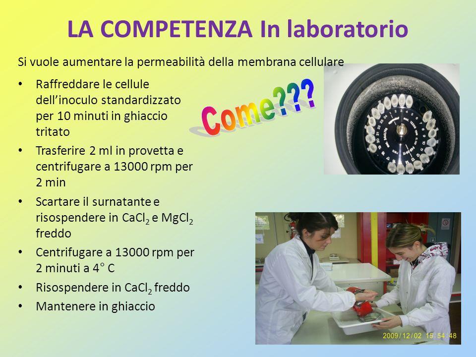 LA COMPETENZA In laboratorio Raffreddare le cellule dellinoculo standardizzato per 10 minuti in ghiaccio tritato Trasferire 2 ml in provetta e centrif