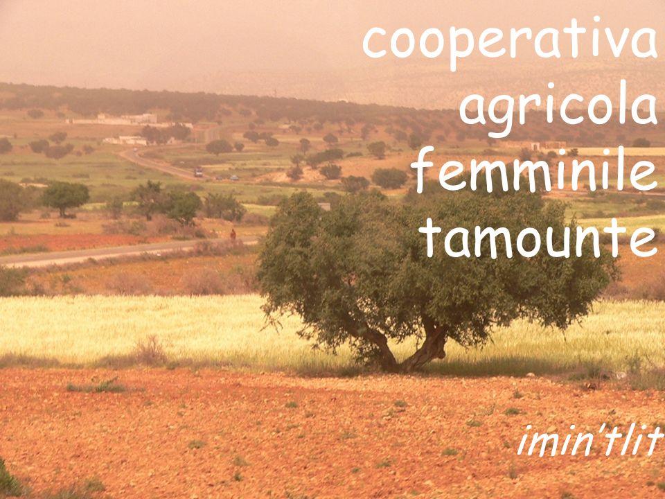 cooperativa agricola femminile tamounte imintlit