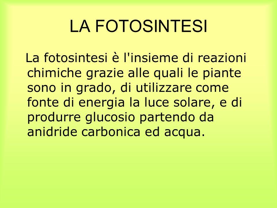 LA FOTOSINTESI La fotosintesi è l'insieme di reazioni chimiche grazie alle quali le piante sono in grado, di utilizzare come fonte di energia la luce