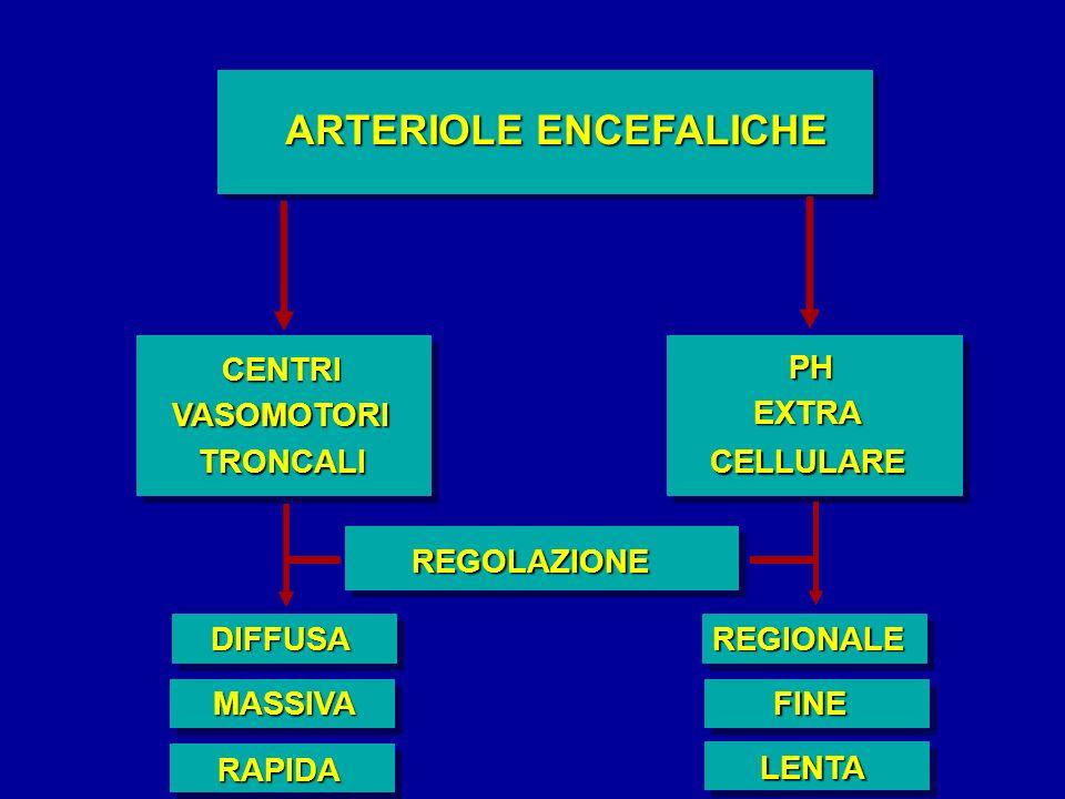 ARTERIOLE ENCEFALICHE CENTRI VASOMOTORI TRONCALI PH EXTRA CELLULARE REGOLAZIONE REGIONALE FINE LENTA DIFFUSA MASSIVA RAPIDA