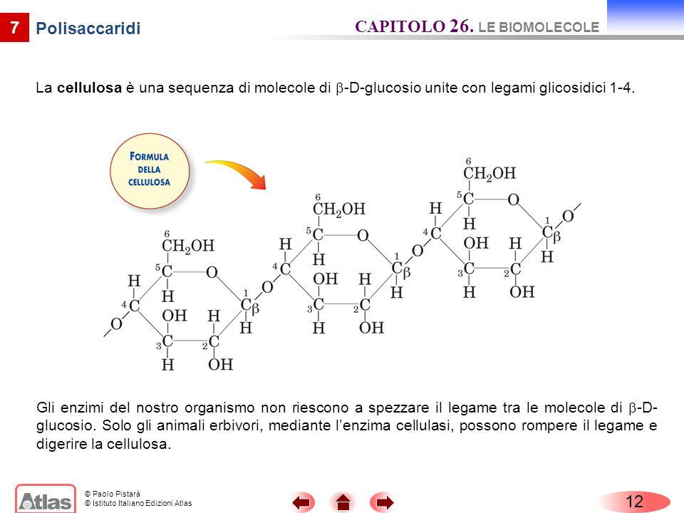 © Paolo Pistarà © Istituto Italiano Edizioni Atlas 7 Polisaccaridi La cellulosa è una sequenza di molecole di -D-glucosio unite con legami glicosidici