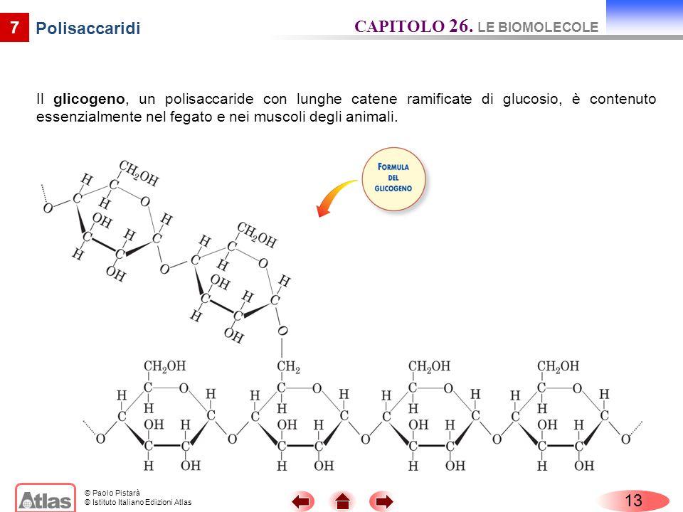 © Paolo Pistarà © Istituto Italiano Edizioni Atlas 7 Polisaccaridi Il glicogeno, un polisaccaride con lunghe catene ramificate di glucosio, è contenut