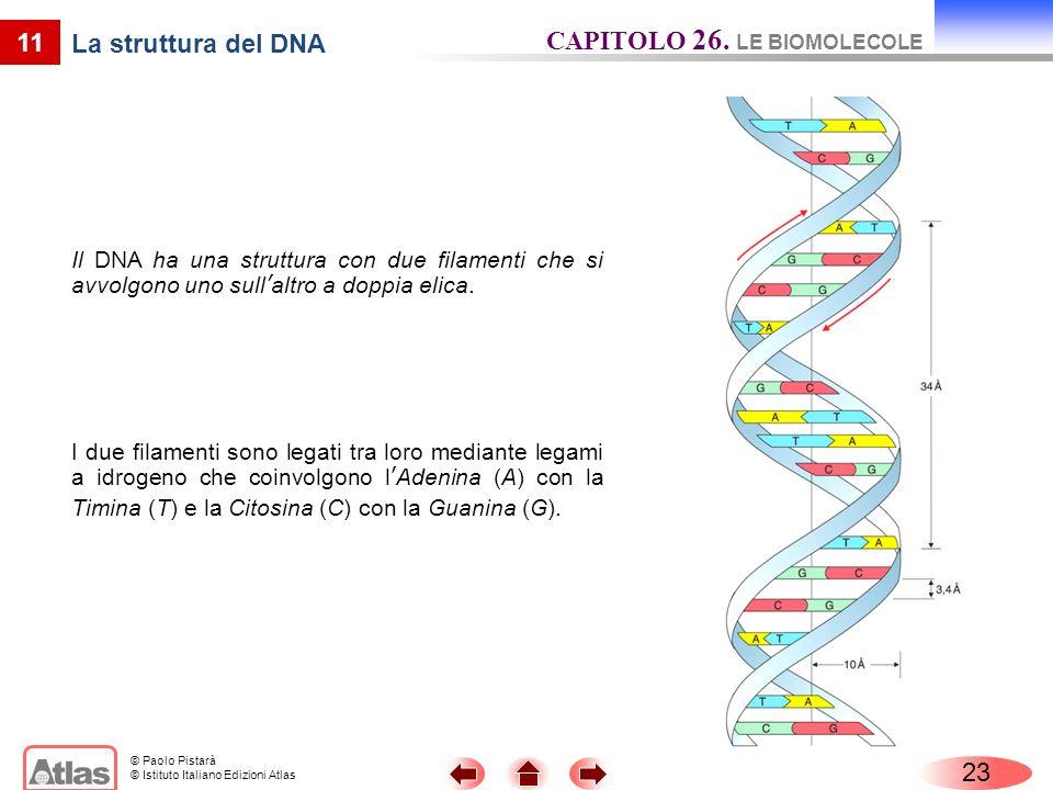 © Paolo Pistarà © Istituto Italiano Edizioni Atlas 11 La struttura del DNA Il DNA ha una struttura con due filamenti che si avvolgono uno sullaltro a