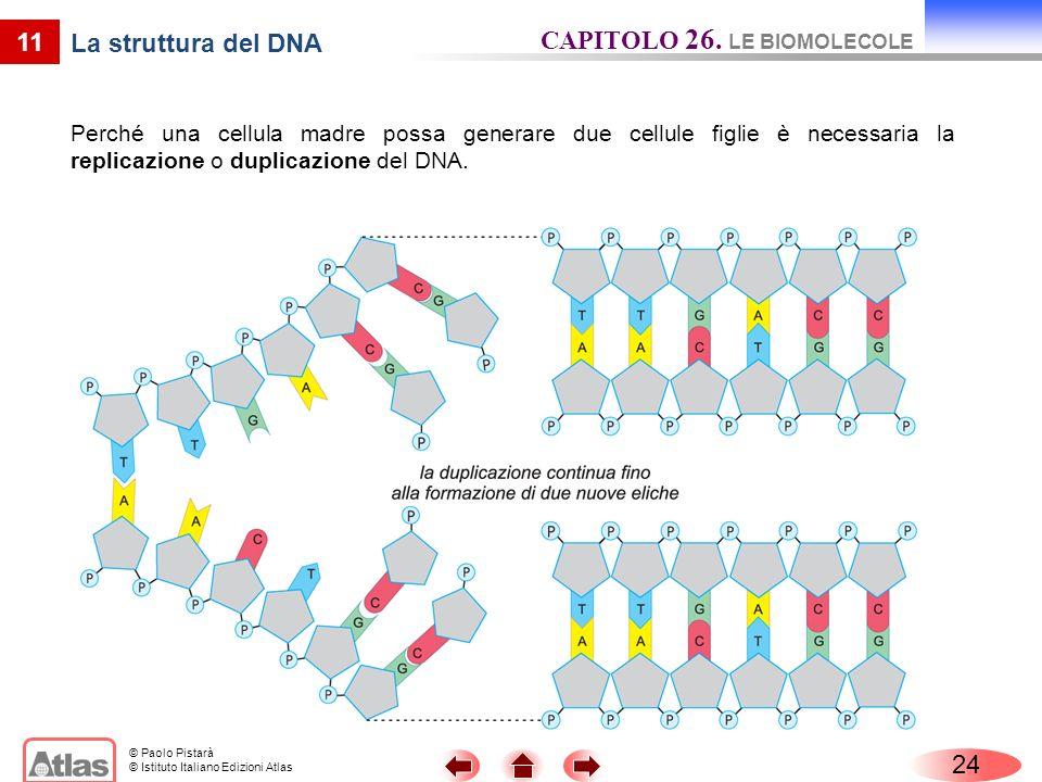 © Paolo Pistarà © Istituto Italiano Edizioni Atlas 11 La struttura del DNA Perché una cellula madre possa generare due cellule figlie è necessaria la