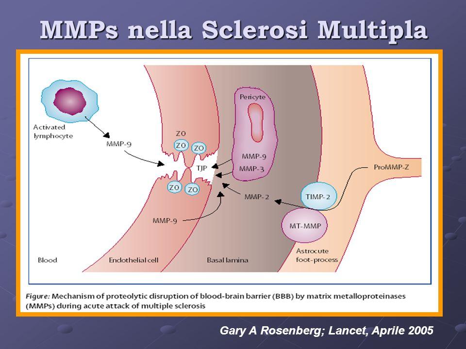 MMPs nella Sclerosi Multipla Gary A Rosenberg; Lancet, Aprile 2005