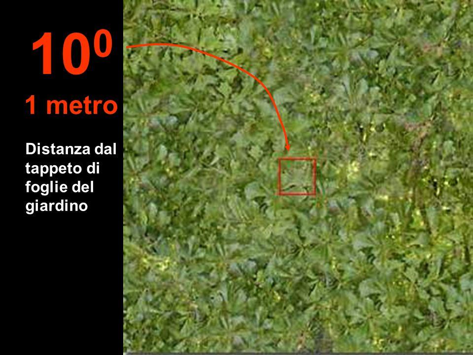 Distanza dal tappeto di foglie del giardino 10 0 1 metro