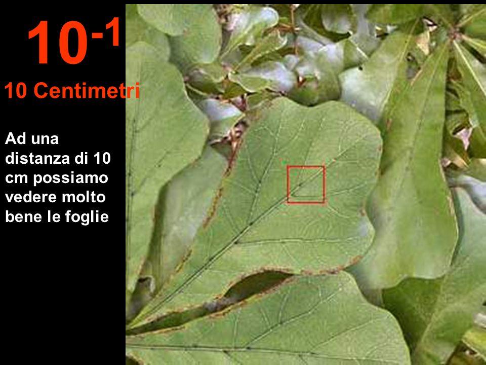 Ad una distanza di 10 cm possiamo vedere molto bene le foglie 10 -1 10 Centimetri