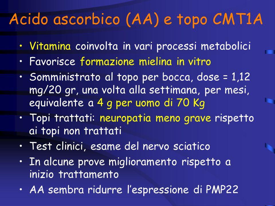 Acido ascorbico (AA) e topo CMT1A Vitamina coinvolta in vari processi metabolici Favorisce formazione mielina in vitro Somministrato al topo per bocca, dose = 1,12 mg/20 gr, una volta alla settimana, per mesi, equivalente a 4 g per uomo di 70 Kg Topi trattati: neuropatia meno grave rispetto ai topi non trattati Test clinici, esame del nervo sciatico In alcune prove miglioramento rispetto a inizio trattamento AA sembra ridurre lespressione di PMP22