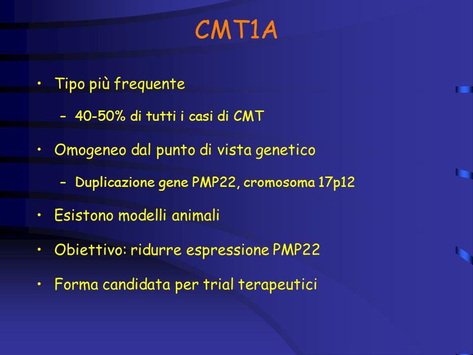 CMT1A Tipo più frequente –40-50% di tutti i casi di CMT Omogeneo dal punto di vista genetico –Duplicazione gene PMP22, cromosoma 17p12 Esistono modelli animali Obiettivo: ridurre espressione PMP22 Forma candidata per trial terapeutici