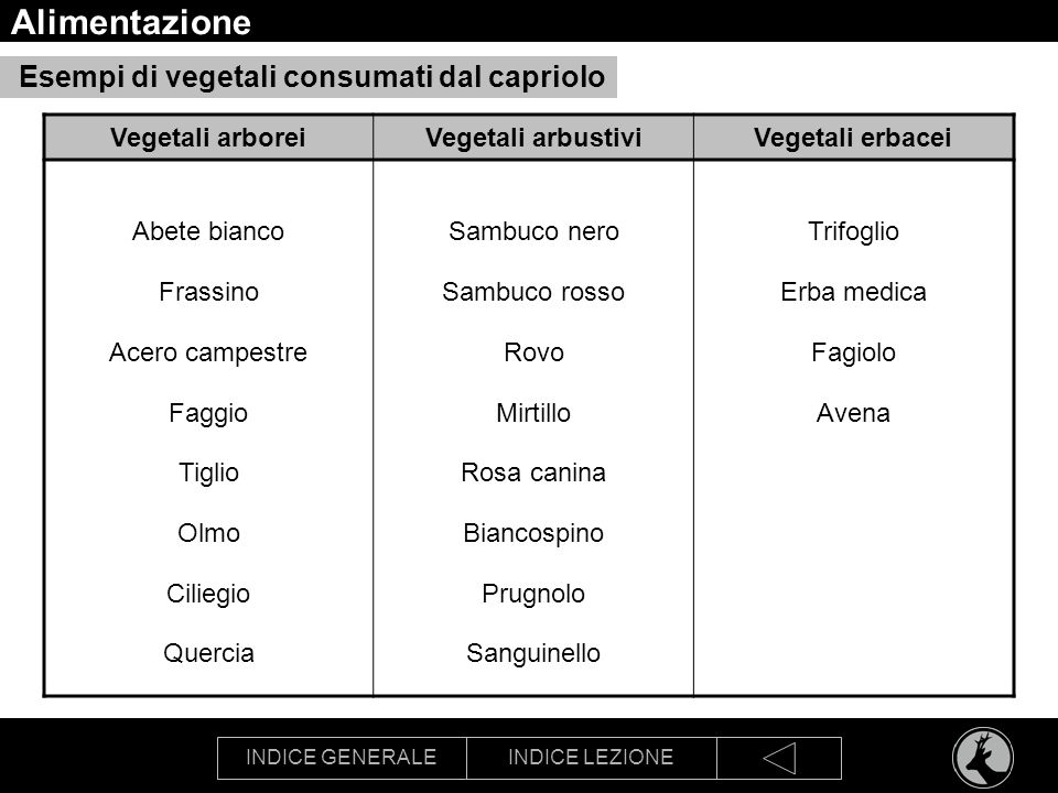 INDICE GENERALEINDICE LEZIONE Alimentazione Esempi di vegetali consumati dal capriolo Vegetali arboreiVegetali arbustiviVegetali erbacei Abete bianco