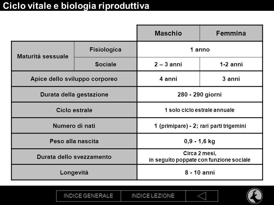 INDICE GENERALEINDICE LEZIONE Ciclo vitale e biologia riproduttiva MaschioFemmina Maturità sessuale Fisiologica1 anno Sociale2 – 3 anni1-2 anni Apice