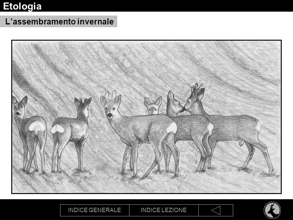 INDICE GENERALEINDICE LEZIONE Etologia Lassembramento invernale