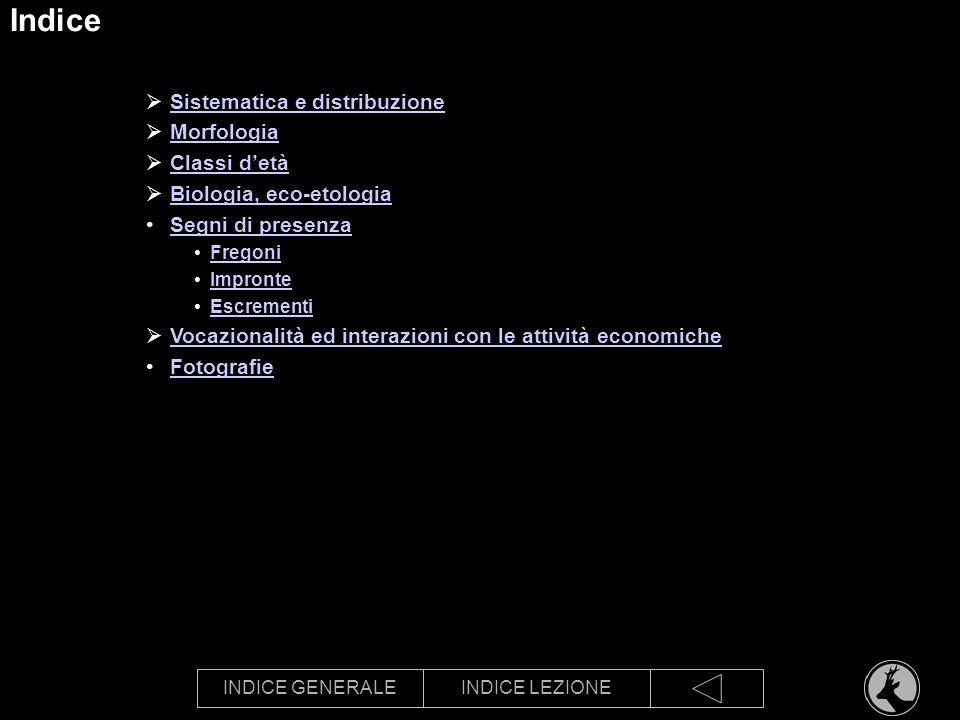 INDICE GENERALEINDICE LEZIONE Indice Sistematica e distribuzione Morfologia Classi detà Biologia, eco-etologia Segni di presenza Fregoni Impronte Escr