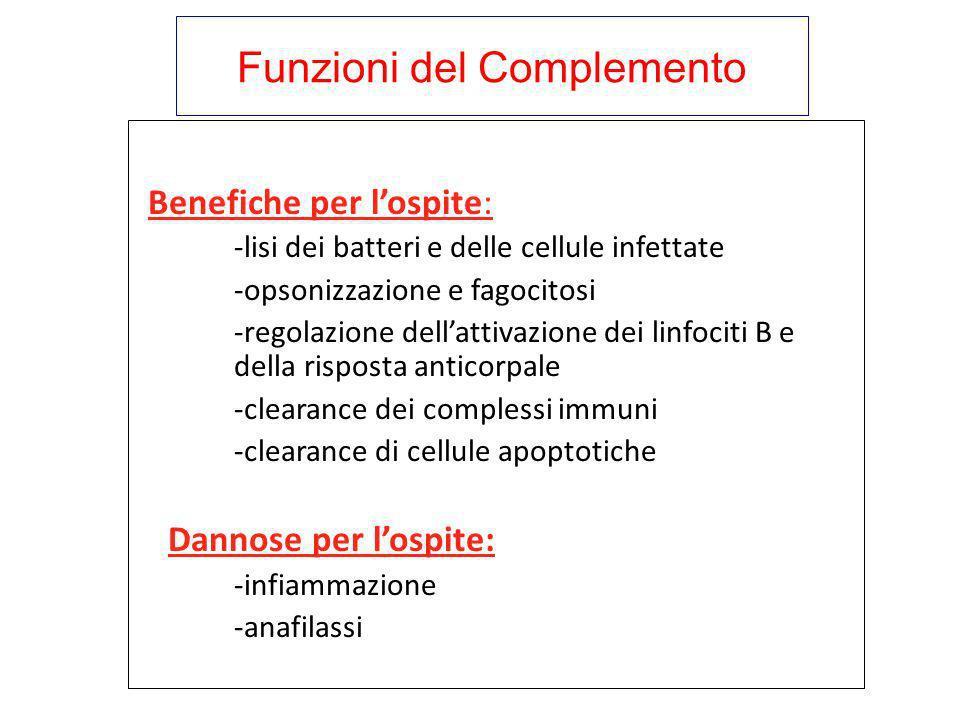 Funzioni del Complemento Benefiche per lospite: -lisi dei batteri e delle cellule infettate -opsonizzazione e fagocitosi -regolazione dellattivazione