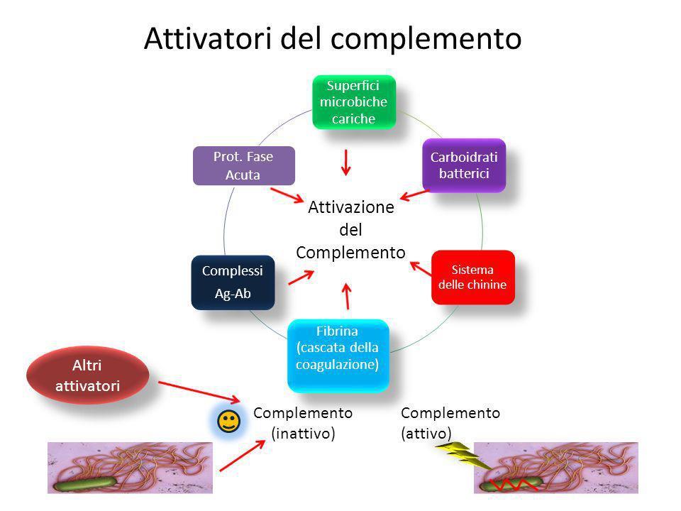 Attivatori del complemento Superfici microbiche cariche Carboidrati batterici Sistema delle chinine Fibrina (cascata della coagulazione) Complessi Ag-