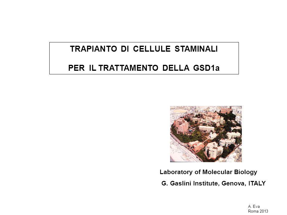 Terapia cellulare della GSD 1a G6pc -/- controllo Modello animale : topi KO per la G6Pasi (Lei K-J, Nature Genet, 1996) Cellule: staminali ematopoietiche (BMMs) (Russell DW; Grompe M; Nature, 422, 2003.