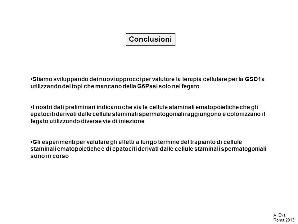 Conclusioni Stiamo sviluppando dei nuovi approcci per valutare la terapia cellulare per la GSD1a utilizzando dei topi che mancano della G6Pasi solo ne
