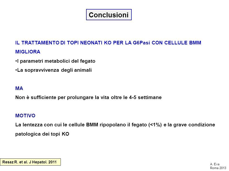 Conclusioni IL TRATTAMENTO DI TOPI NEONATI KO PER LA G6Pasi CON CELLULE BMM MIGLIORA I parametri metabolici del fegato La sopravvivenza degli animali
