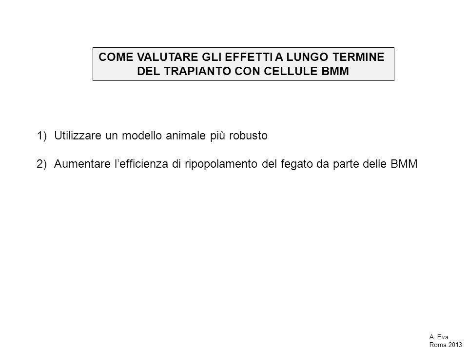COME VALUTARE GLI EFFETTI A LUNGO TERMINE DEL TRAPIANTO CON CELLULE BMM 1)Utilizzare un modello animale più robusto 2)Aumentare lefficienza di ripopolamento del fegato da parte delle BMM A.